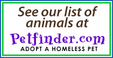 See our adoptable birds on Pet Finder!